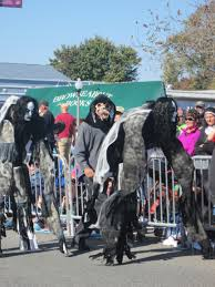 2015 rehoboth sea witch festival don u0027t be a scaredy cat