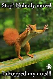 Squirrel Nuts Meme - 33 most perfectly timed photos will take your breath away funniest