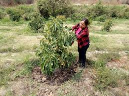 small plant supports poor rural communities in mexico receive a boost to support
