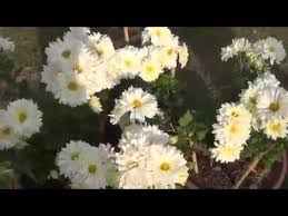 Identify Flowers - identify flowers and plants with their names youtube