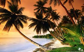 beautiful beach palm trees on sunset beach wallpapers