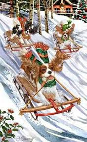 462 best cavalier king charles spaniel christmas images on