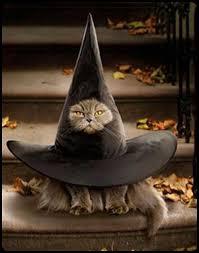 Halloween Costume Cat 25 Cat Costumes Ideas Cute Cat Costumes