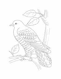 birds coloring pages 17 birds kids printables coloring pages