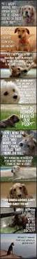 best 25 cute dog quotes ideas on pinterest puppy quotes dog