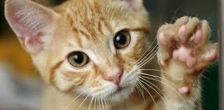 imagenes de gatitos sin frases la curiosidad mató al gato de dónde viene esta frase curiosidades