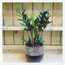 5 easy houseplants u2014 swansons nursery seattle u0027s favorite garden