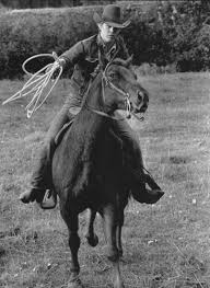 Louisiana Man Rides Horse Into Bar Lassos Man Outside Upi Com