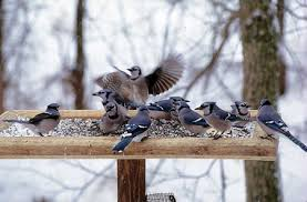 where have the birds gone wildbirds com knows