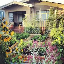 urban vegetable gardening ideas decorating clear
