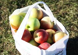 best places to go apple picking near boston boston magazine