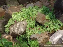 create a successful low cost succulent garden kumbula