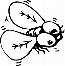 fly coloring page 9208