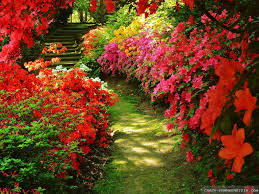 Flower Gardens Wallpapers - knumathise red rose flower garden wallpaper images