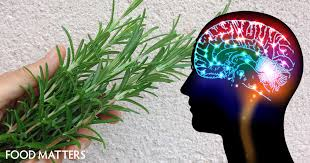 11 herbs that will help make your memory focus and brain work