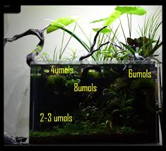 No Light Plants Plants Able To Grow In Extreme Low Light 4umols Of Par The