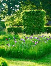 Wonderful Gardens 133 Best Wild Flower Garden Images On Pinterest Wild Flower