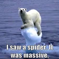 I Saw A Spider Meme - polar bear massive spider memes comics pinterest polar