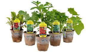 fruit edibles organic edibles