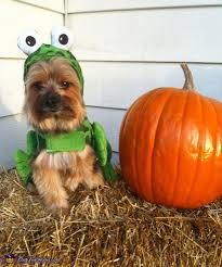 Martha Stewart Dog Halloween Costumes 20 Puppy Halloween Costumes Ideas Puppy