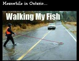 Funny Canadian Memes - basic ontario for you lol meanwhile pinterest ontario memes