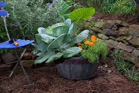 choose the right container for your plants bonnie plants