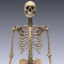 3d Human Anatomy Human Skeleton Rigged 3d Lwo