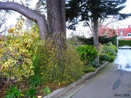 winter flowering jasmine name that plant
