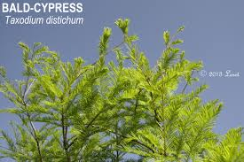 florida native plants for sale trees what florida native plant is blooming today