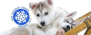 designer dog collars dog beds pet supplies muttropolis