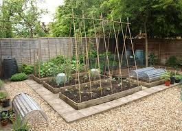 traditional way to support runner bean peas support garden