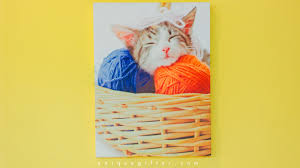 fun home decor gifts for animal lovers unique gifter