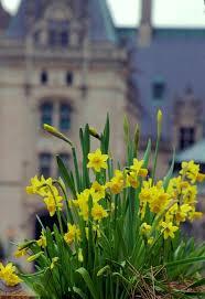222 best biltmore house u0026 gardens images on pinterest biltmore