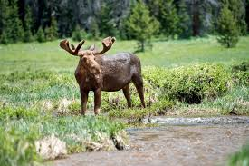 Colorado Wildlife Tours images 5 colorado wildlife reserves to add to your summer bucket list jpg