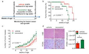 aging resveratrol fuels her2 and erα positive breast cancer
