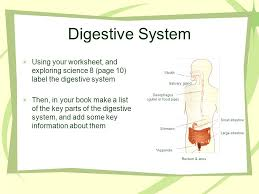 digestive system d crowley digestive system to be able to label