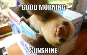 Good Morning Sunshine Meme - morning sunshine good morning meme