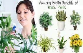 benefits of houseplants 6 amazing benefits of houseplants healthcare