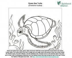 green coloring page green sea turtle coloring page rainforest alliance