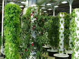 vertical gardens chicago home outdoor decoration