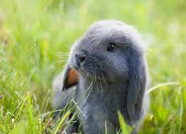 How Do I Get Rid Of Rabbits In My Backyard Rabies In Rabbits Petmd