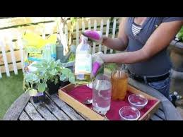 natural insecticides for a vegetable garden vegetable gardening