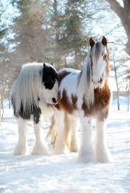 best 25 gypsy horse ideas only on pinterest pretty horses