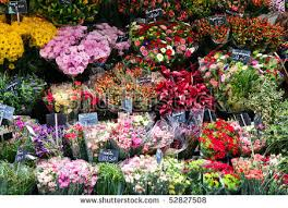 flower shops beautiful colorful flowers flower shop stock photo 52827508