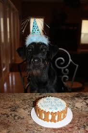 12 best for lola images on pinterest dog bone cake dog bones