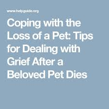 grieving the loss of a pet best 25 pet grief ideas on loss of pet dog poems and