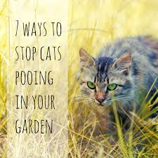 7 ways to stop cats pooing in your garden tips for keeping