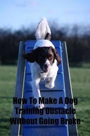 best 25 agility training for dogs ideas on pinterest dog