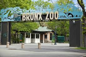 9 wild facts about the bronx zoo mental floss