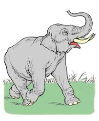 coloring in pages animals animal coloring pages sheets and pictures